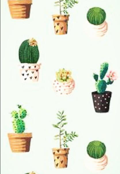 maglietta Cactus color