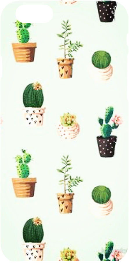 cover Cactus color