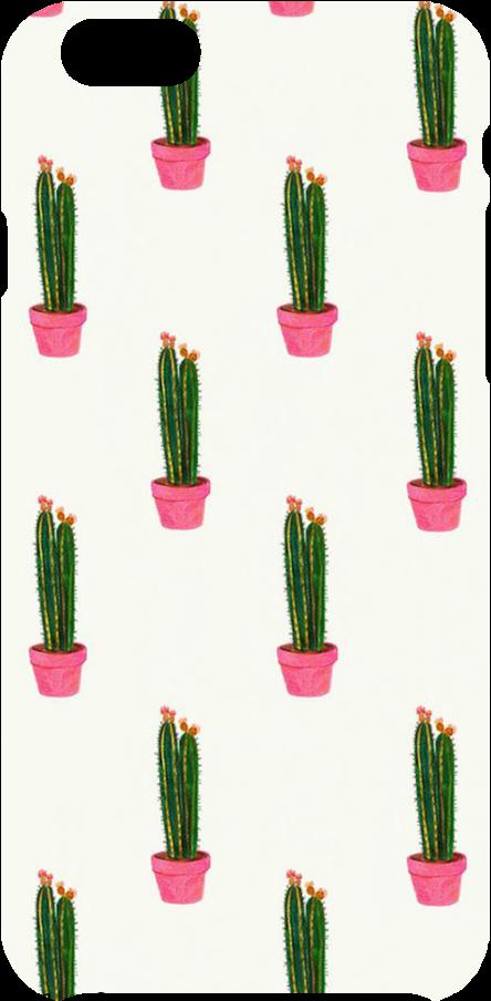 cover Cactus