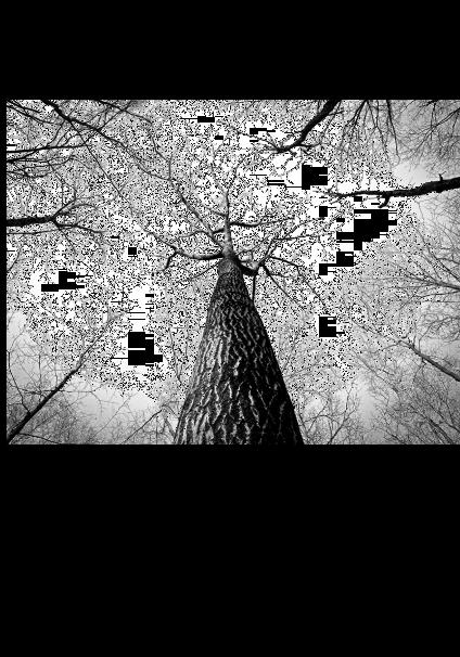 maglietta trees