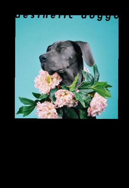 maglietta floral doggo