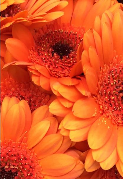 maglietta Flowers in Holland
