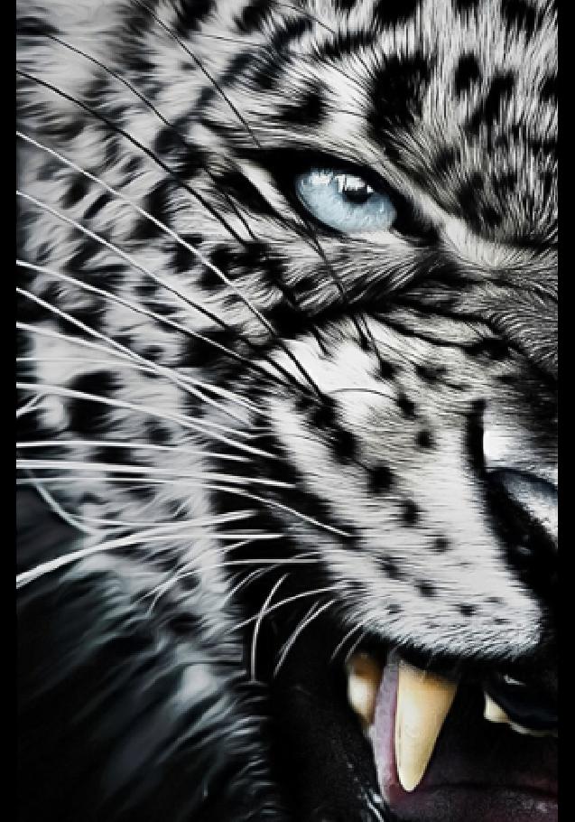 maglietta Tiger Cover