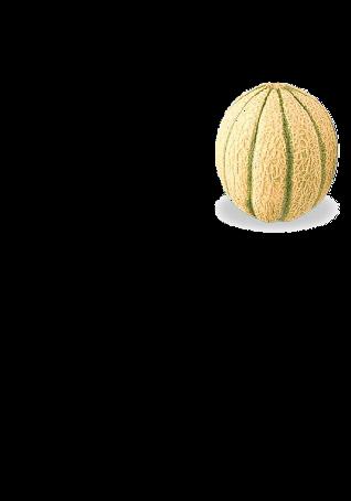 maglietta Melone