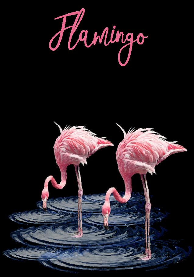 maglietta Flamingos