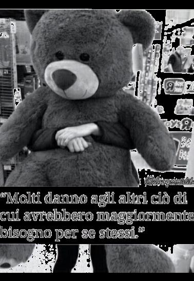 maglietta orso