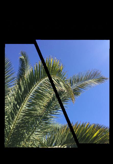 maglietta Palms tree