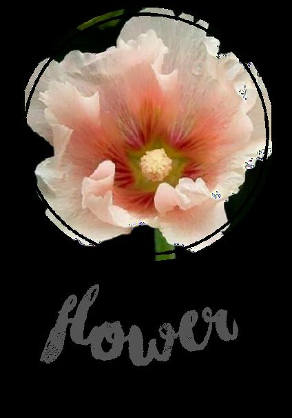 maglietta Flowershirt