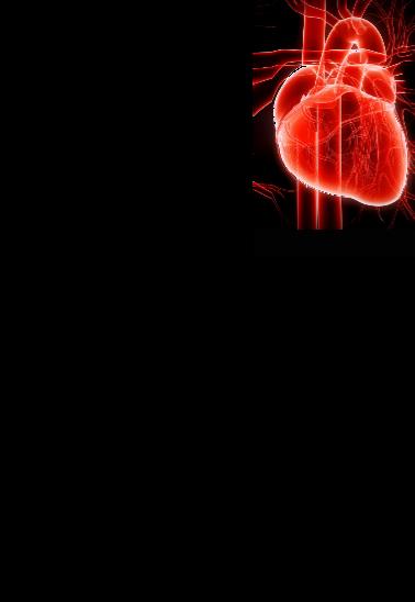 maglietta T-Shirt HEART OFFICIAL