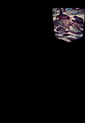 maglietta pcket 1-killer whale