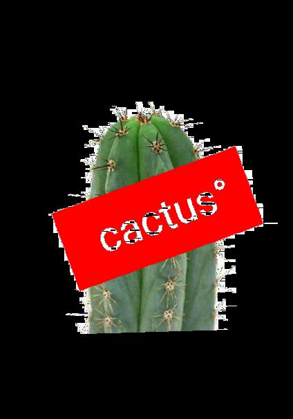 maglietta T-shirt, felpa e cover della cactus°