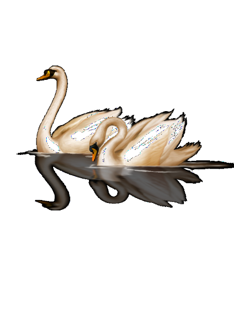 maglietta swan-DBN