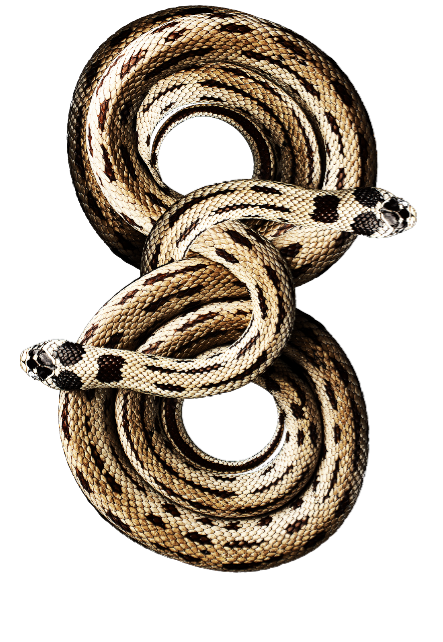maglietta snake2