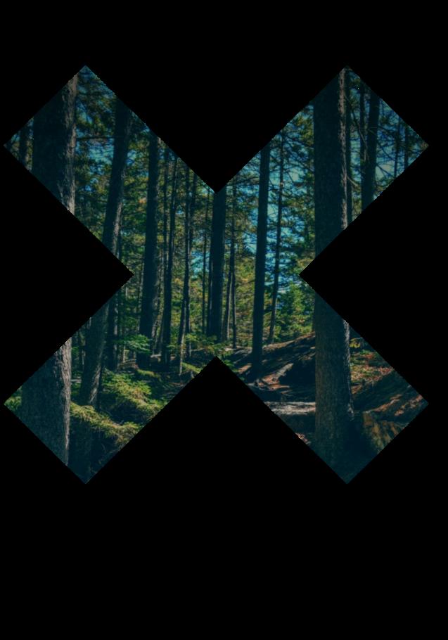 maglietta Forest
