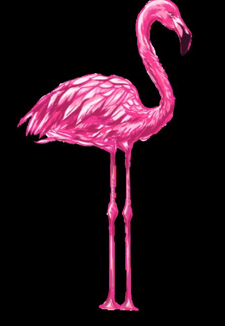 maglietta chic pink