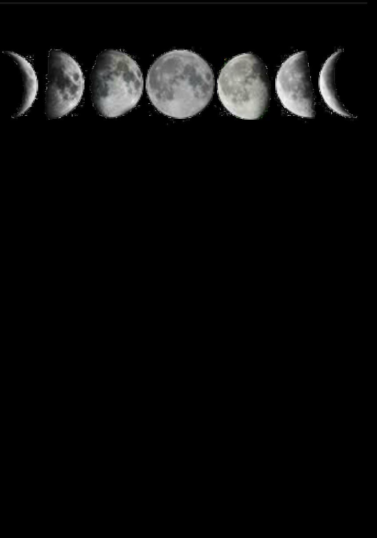 maglietta new moon