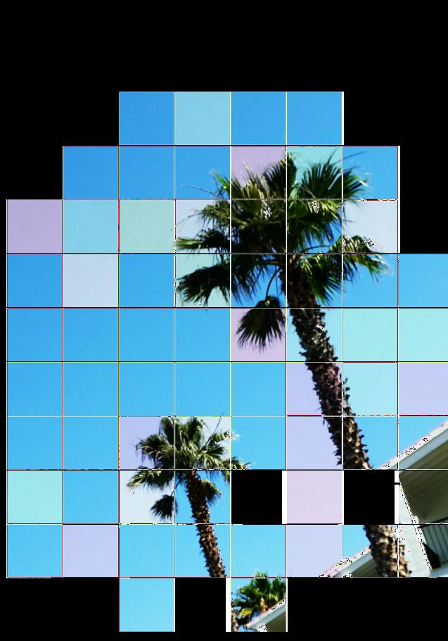 maglietta Palms