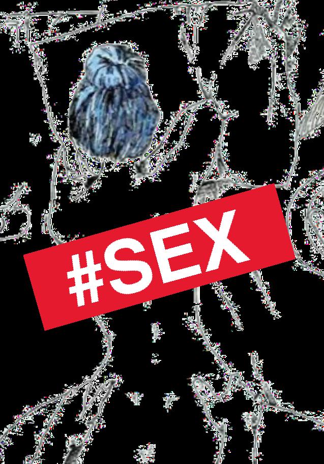 maglietta SEX
