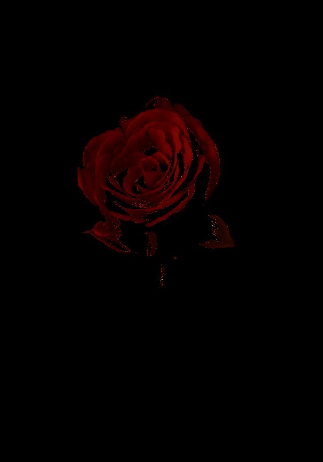 maglietta roses