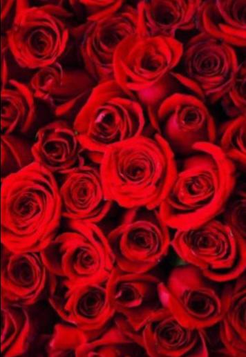 maglietta Cover Red Roses