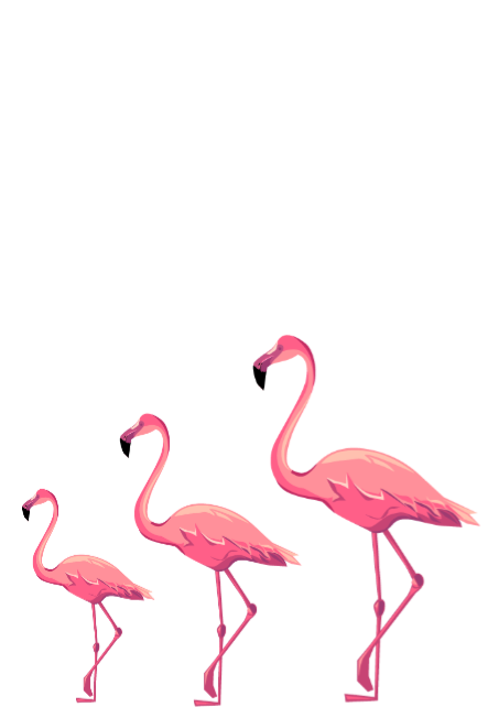 maglietta Flamingo