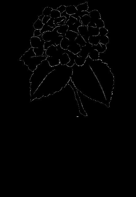 maglietta Hortencia SKETCH