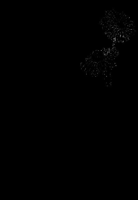 maglietta Chrysanthemum SKETCH
