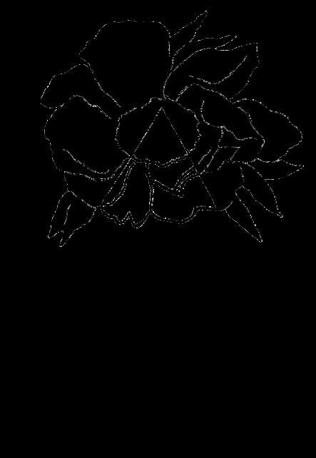 maglietta Paeonia SKETCH