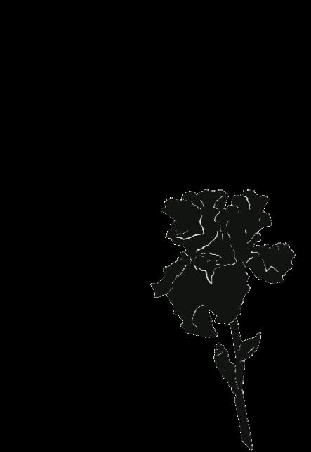maglietta IRIS SKETCH