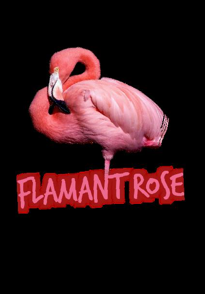 maglietta Flamant Rose