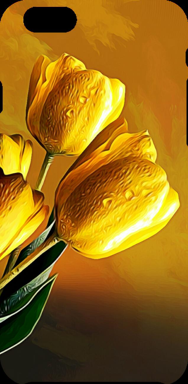 cover Tulipani al tramonto