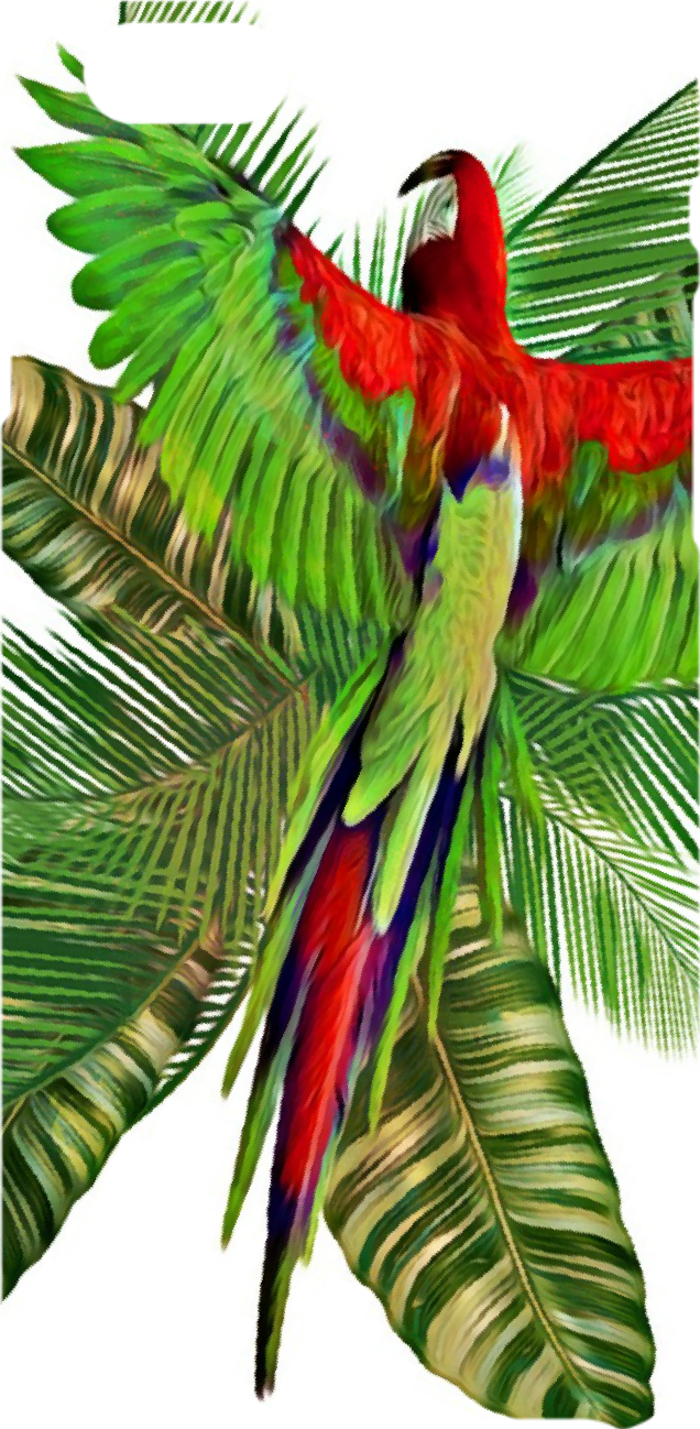 cover Tropical Days
