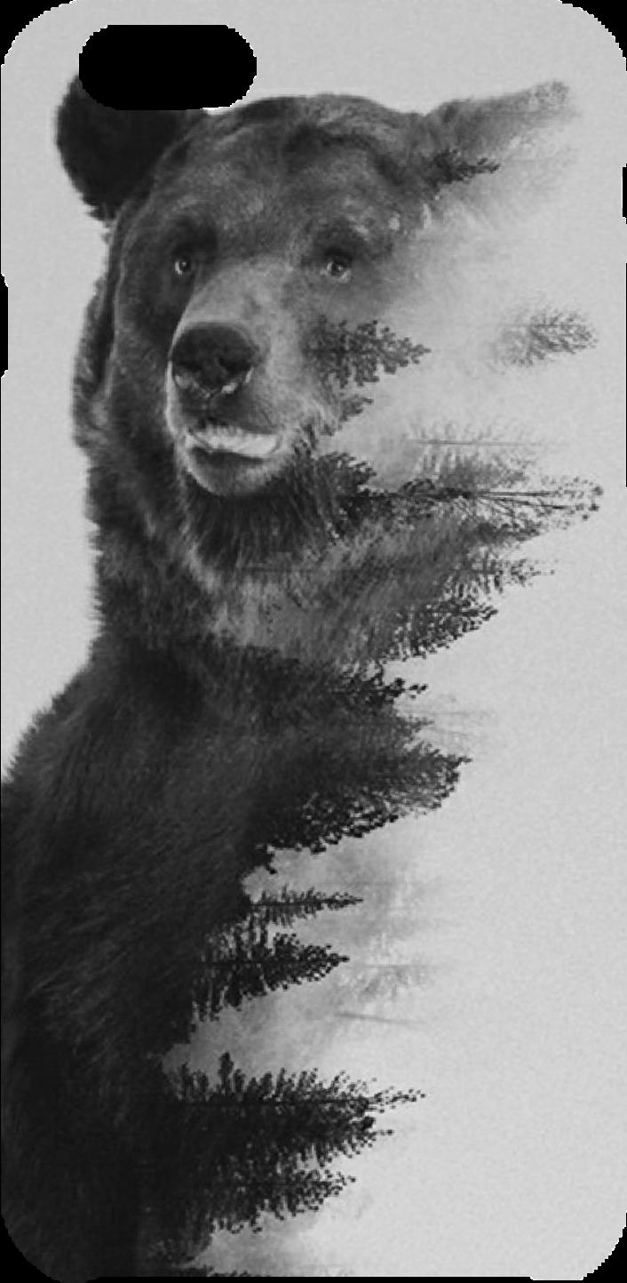 cover Bear