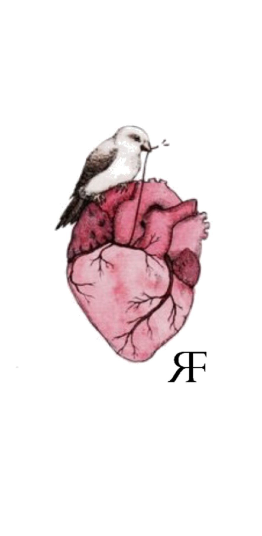 cover Girl Human Heart Pink