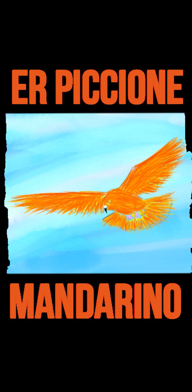 cover er piccione mandarino