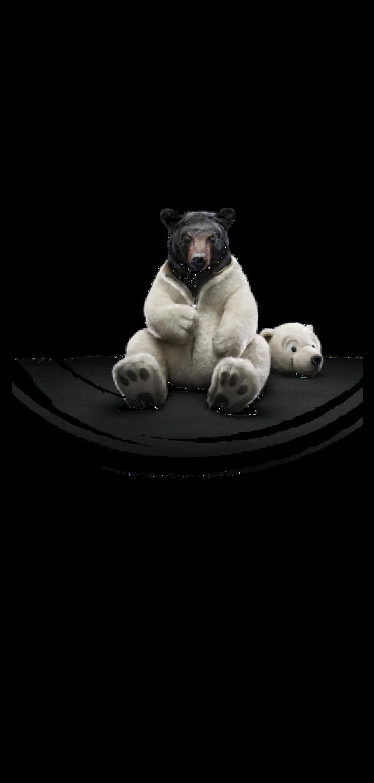 cover T-shirt Bear
