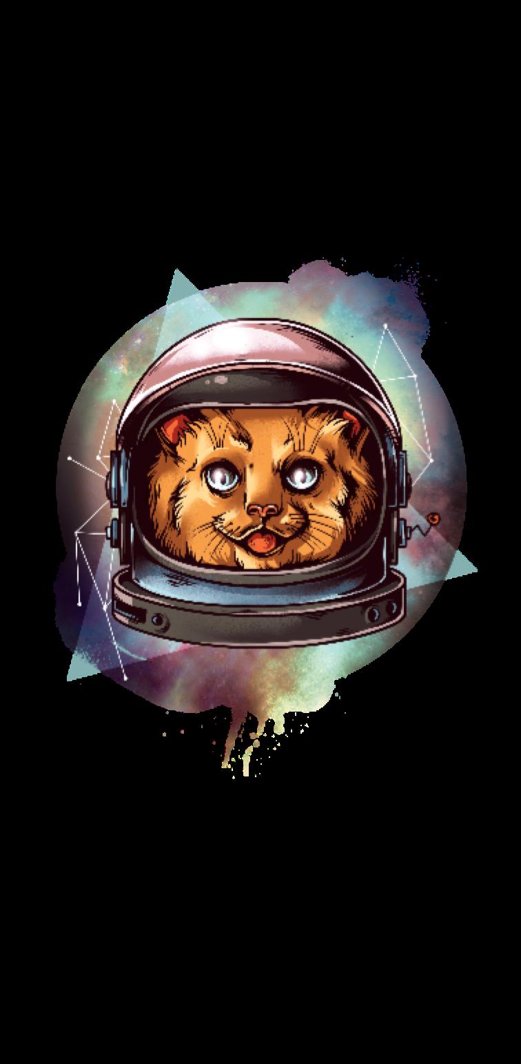 cover Cosmo cat