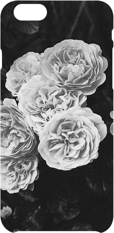 cover Monochrome Roses