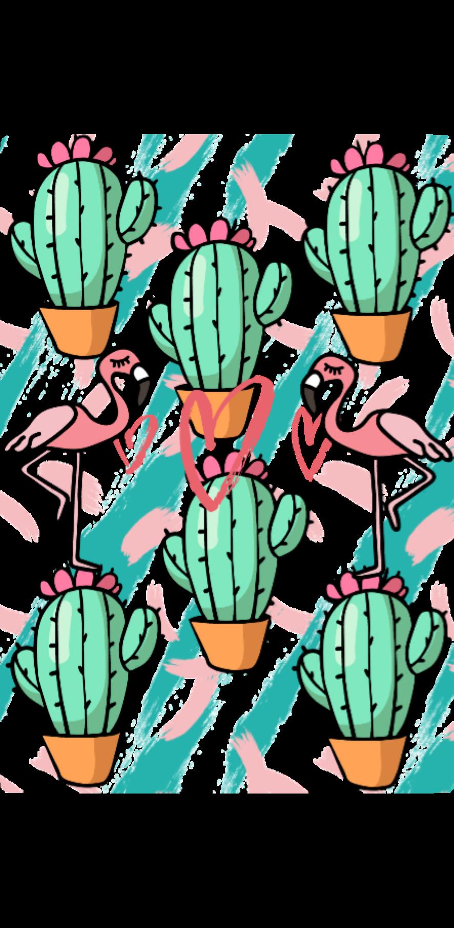 cover Cactus&More