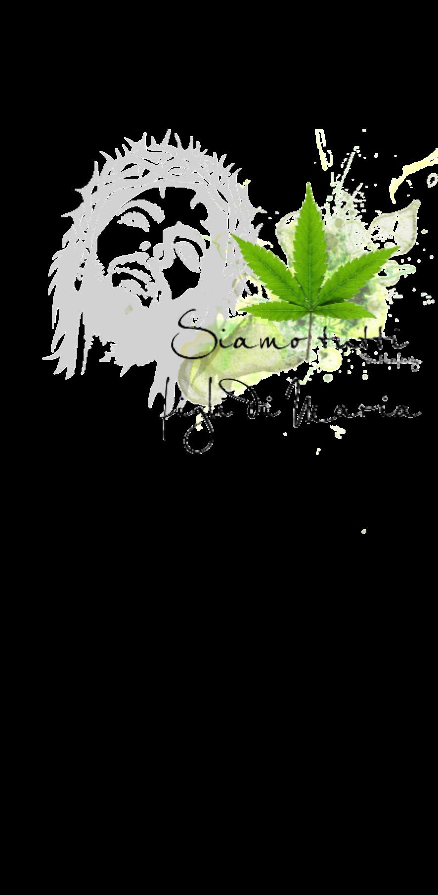 cover Cannabis