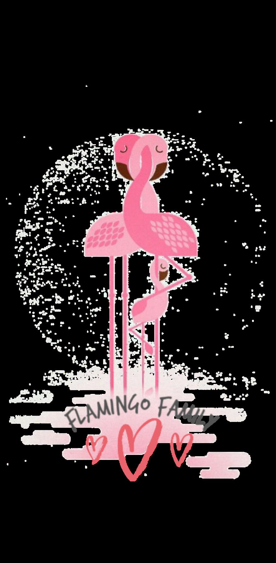 cover Flamingo Family