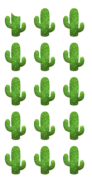cover cover cactus