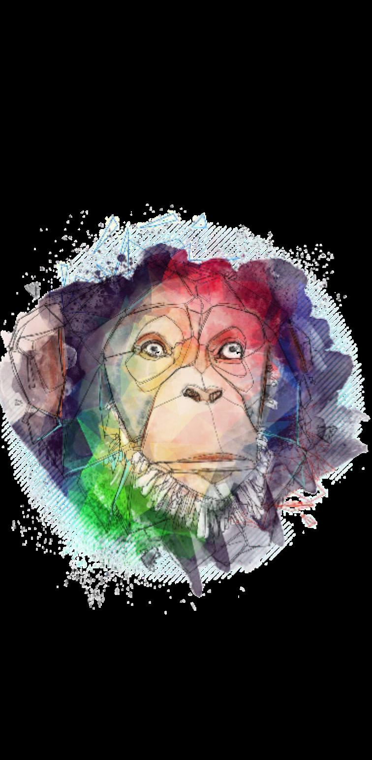 cover scimmiabho