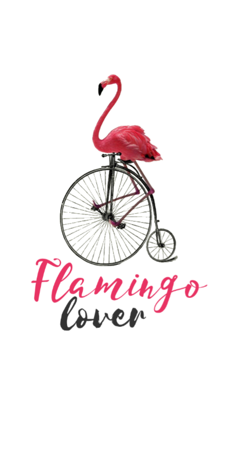cover flamingo collection