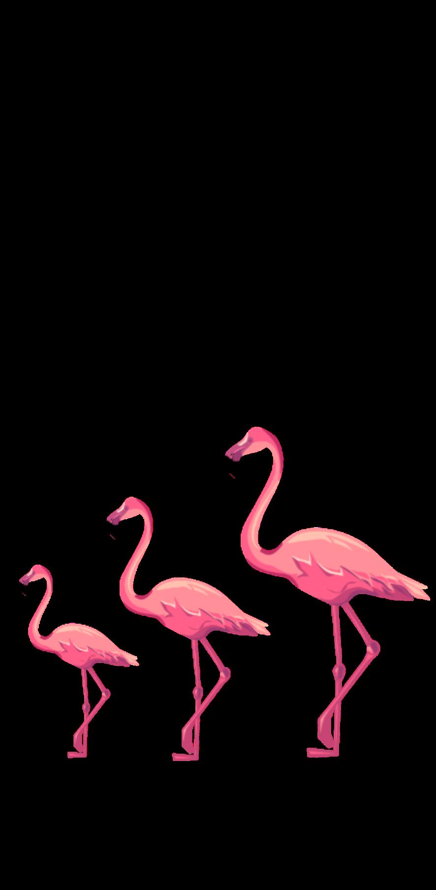 cover Flamingo