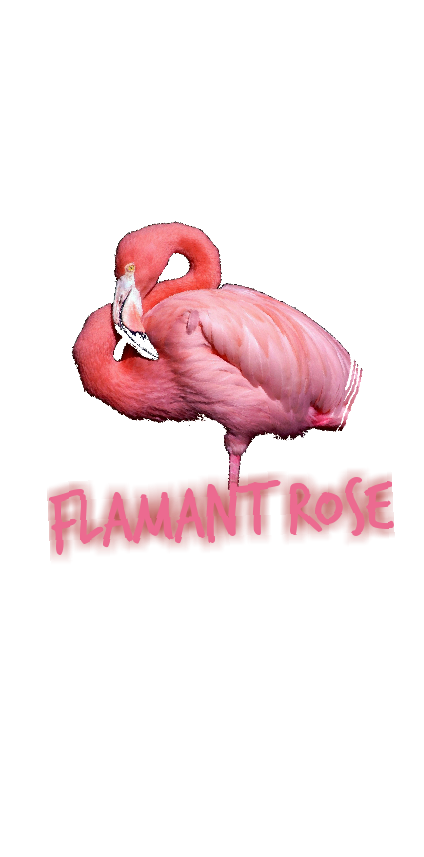cover Flamant Rose